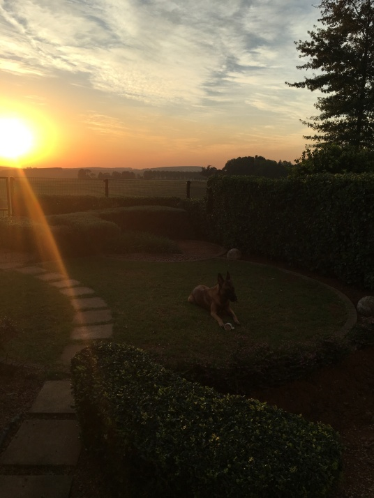 Sunrise Garlington